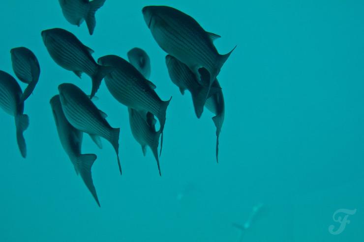 caleta de fuste fish